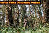 samsunda-balta-girmemis-orman